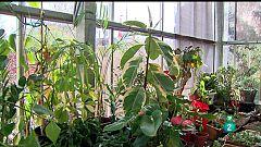 La Aventura del Saber. Hospital de plantas. Aula de Educación Medioambiental