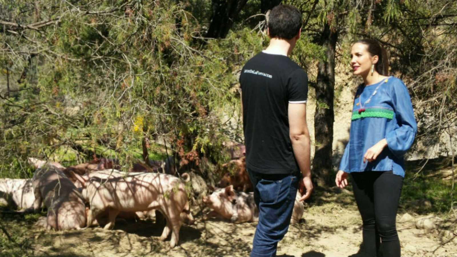 """El cerdo """"dálmata"""""""