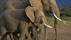 Grandes documentales - Grandes Parques Naturales de África: Parque Nacional de los Elefantes de Addo