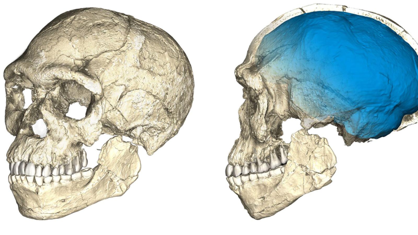Los restos más antiguos conocidos de Homo Sapiens han sido hallados en un lugar de Marruecos llamado Yebel Irhoud, unos 150 kilómetros al oeste de Marrakech, según un estudio publicado en la revista especializada Nature. Este descubrimiento cambiaría
