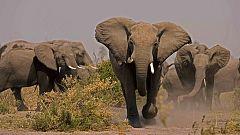 Grandes documentales - Alma de elefante