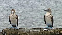 Unidos por el Patrimonio - Islas Galápagos (Ecuador)