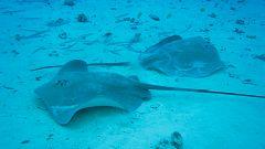 Grandes documentales - El planeta bajo el agua: El desierto bajo el agua
