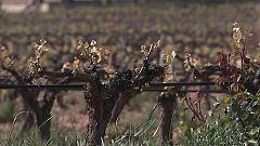Somos #DietaMediterránea - La cuna del vino
