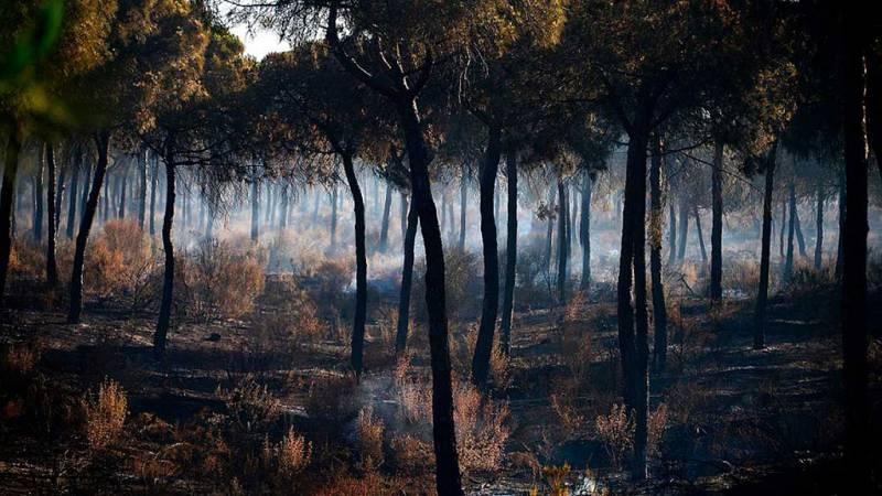 El incendio de Santa Olalla del Cala Huelva se daba por estabilizado según el INFOCA