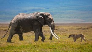 Los depredadores de gigantes de África