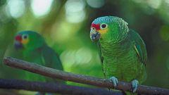 Grandes documentales - La Tierra. Un nuevo entorno natural: Bosques