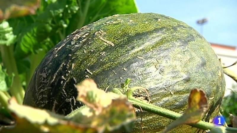 Cómo saber si un melón está rico