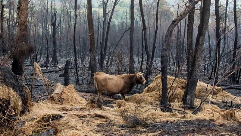 Informe Semanal - Fuego con intención - ver ahora