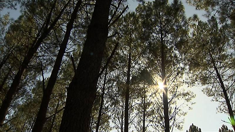 Un bosque de Pontevedra, testigo del cambio climático