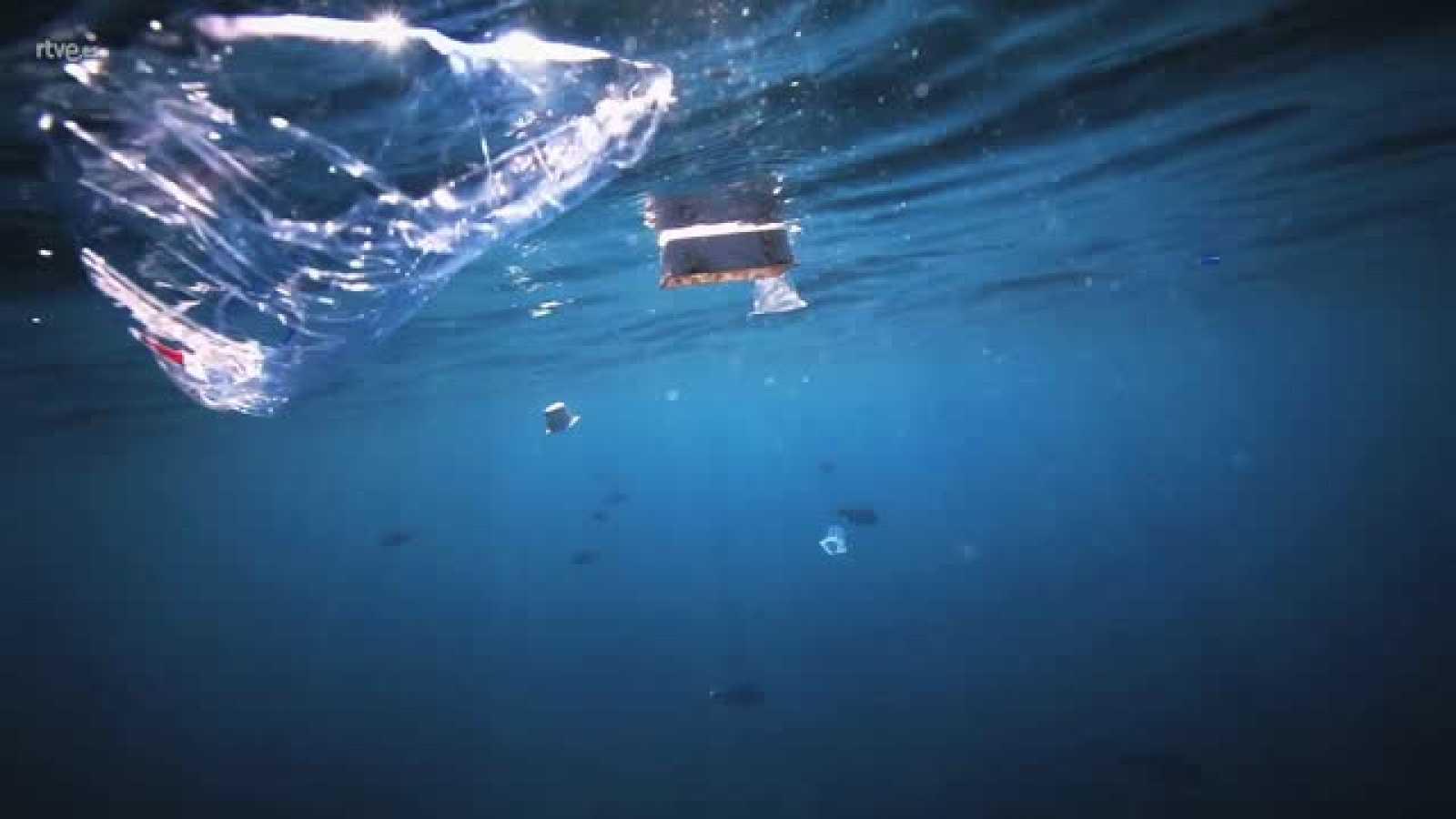 El escarabajo verde - La mar de polímeros - Avance