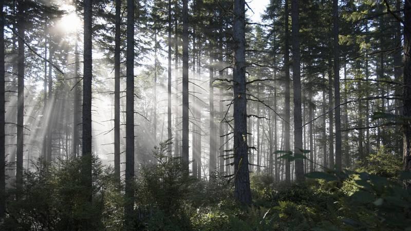 Un estudio científico pretende demostrar el efecto curativo de los bosques