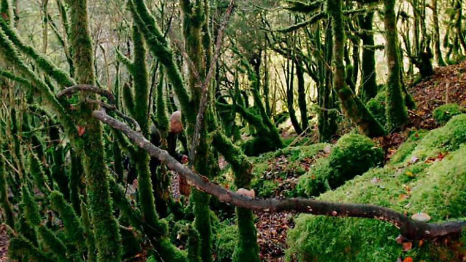 El señor de los bosques - Programa 2 - ver ahora