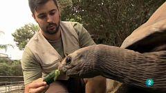 Cinc dies a... Zoo de Barcelona