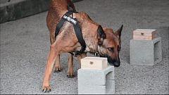 Reportaje: Campeonato Nacional Militar de adiestramiento de perros