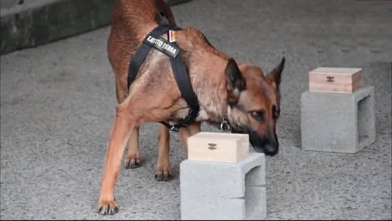 Reportaje - Campeonato Militar de adiestramiento de perros - ver ahora