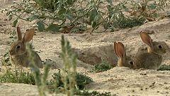 Jara y sedal - Descaste en La Mancha