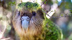 Grandes documentales - Nueva Zelanda salvaje: A la deriva