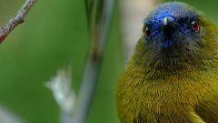 Grandes documentales - Nueva Zelanda salvaje: Extremos salvajes