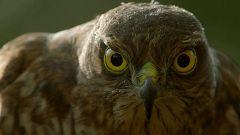 Grandes documentales - Animales de altura: Los amos del cielo