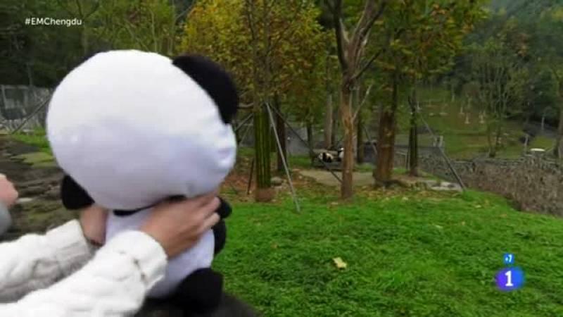 Españoles en el mundo - Reserva natural de osos panda