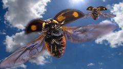 Grandes documentales - Animales de altura: Cielos abarrotados