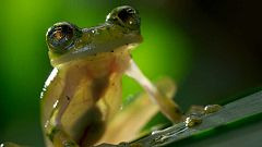 Otros documentales - Planeta Tierra II: Selvas