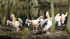 Grandes documentales - Holanda salvaje: El delta viviente