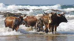 Grandes documentales - Supervivencia extrema: Animales sociales