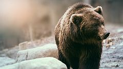Grandes documentales - Territorio Grizzly