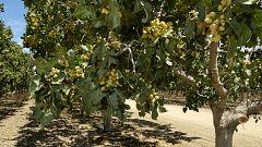 Otros documentales - Comida al descubierto: GMS, pistachos y cebollas