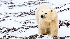 Grandes documentales - El aliento del Ártico. El Norte salvaje