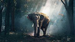 Grandes documentales - La India oculta: Tierra de contrastes