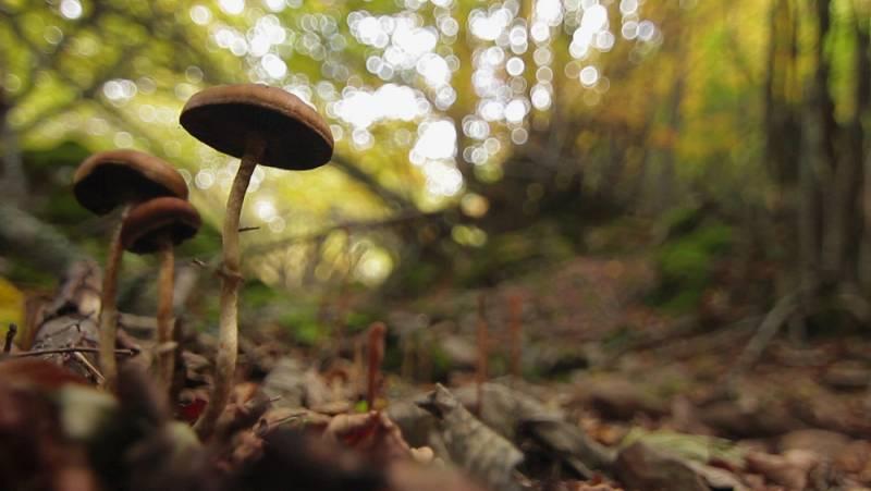 El escarabajo verde - Bosques para el futuro - Avance