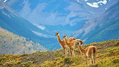 Grandes documentales - Patagonia salvaje: Montañas de fuego