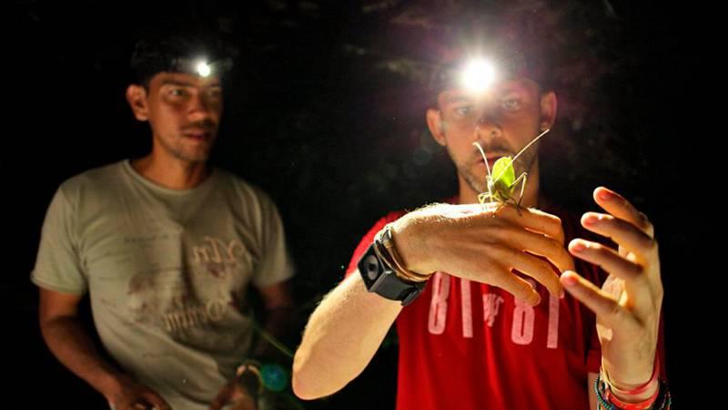 Otros documentales - Criaturas salvajes con Dominic Monaghan: el escarabajo Titán - ver ahora