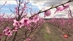"""Repor - De flor en flor - Víctor Ibars y su familia han arreglado la masía para ofrecer """"calçotadas"""" a los turistas"""