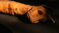 Documenta2 - Momias animales. El oscuro secreto de Egipto