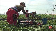 Repor - En el corazón de la fresa: Temporeras en la finca de Antonio Conde, en Lucena del Puerto