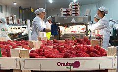 Repor - En el corazón de la fresa