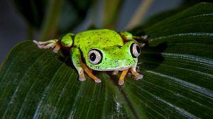 Criaturas salvajes con Dominic Monaghan : Costa Rica