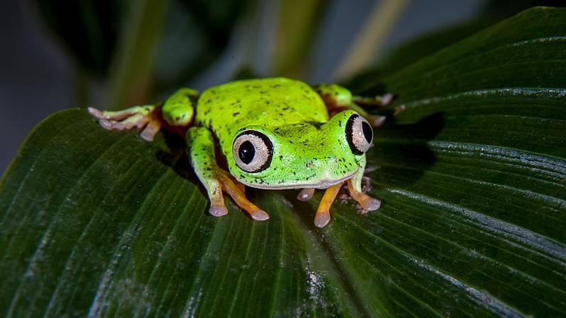 Otros documentales - Criaturas salvajes con Dominic Monaghan : Costa Rica - ver ahora