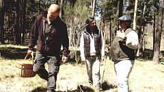 El señor de los bosques - Hoyocasero, Avila