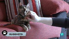 La meva mascota i jo - Margarita, la gateta de la Gisela