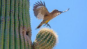 Salvaje Oeste: los desiertos centrales