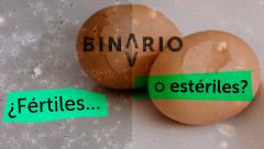 Binario - 'Nacidos bajo la boina' - Avance