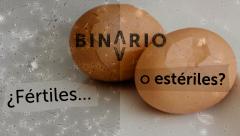 Binario - Capítulo 2. 'Nacidos bajo la boina'