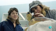 La meva mascota i jo - La Gisela visita el CRAM