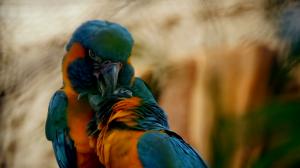 La vida secreta del zoo. Episodio 5