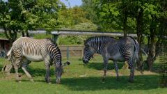 Otros documentales - La vida secreta del zoo. Episodio 7